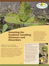 Scouting soybean seedling diseases and disorders