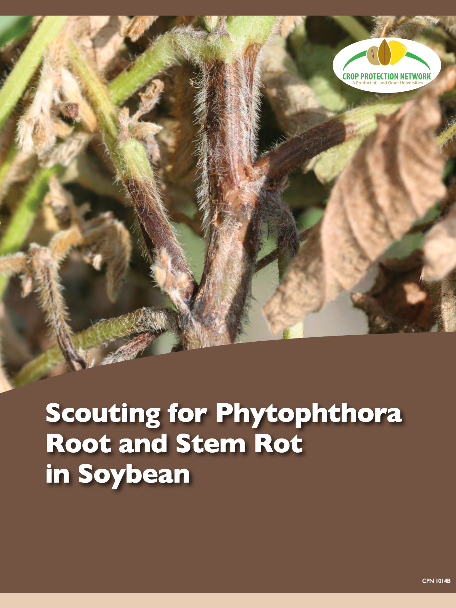 Scouting Phytophthora