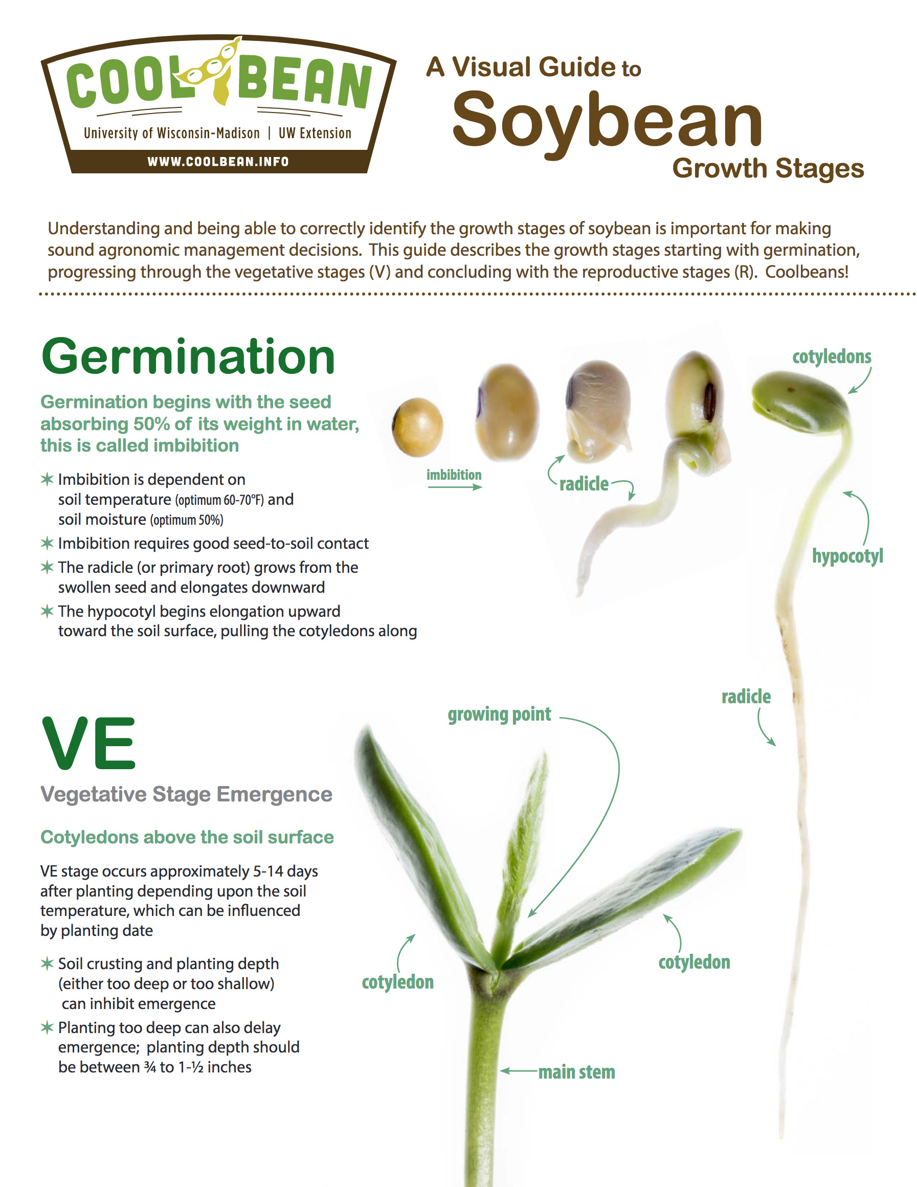 soybean-growth-stages