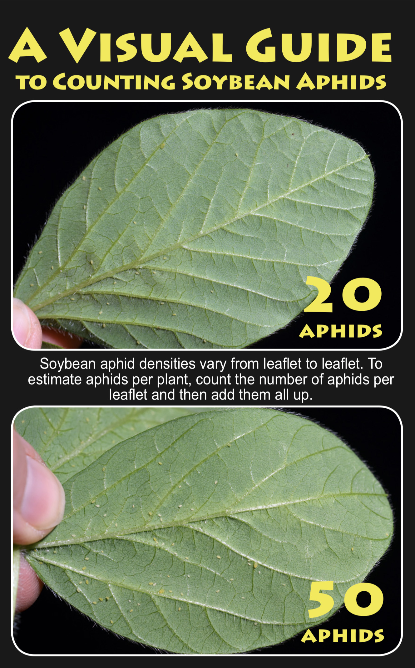 Visual Guide to Counting Soybean Aphids