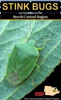 Stink Bugs on Soybean